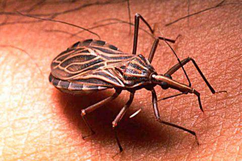 chagas cadime salud programafives fives